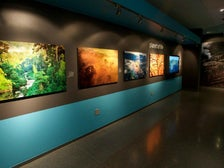 """""""Planet of Life"""" from """"LIFE: A Journey Through Time"""" at Annenberg Space for Photography"""